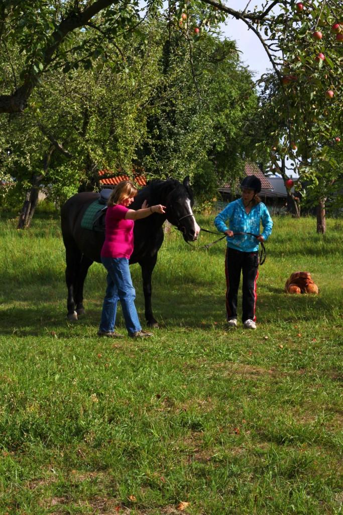 Psychoterapie pomocí koní PN Jihlava